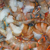 Fresh Tiger Shrimps Royalty Free Stock Photo