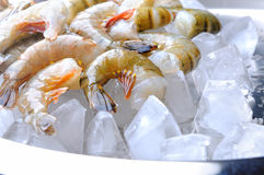 Fresh tiger shrimps with ice Royalty Free Stock Photo