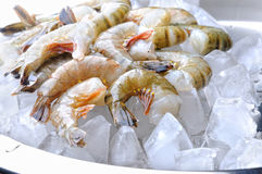 Fresh tiger shrimps with ice Royalty Free Stock Photography