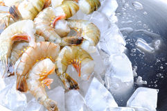Fresh tiger shrimps with ice Stock Photography