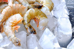 Fresh tiger shrimps with ice Royalty Free Stock Images