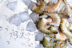 Fresh tiger shrimps with ice Stock Photo