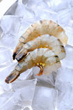 Fresh tiger shrimps with ice Stock Images
