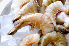 Fresh tiger shrimps with ice Stock Image