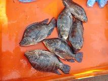 Fresh Tilapia fish. In the fresh market Royalty Free Stock Photography