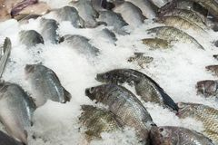 Fresh tilapia fish on ice. In the market Royalty Free Stock Photography