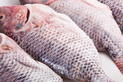Fresh Tilapia Fish Stock Photo