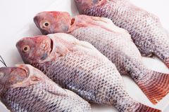 Fresh Tilapia Fish Stock Images