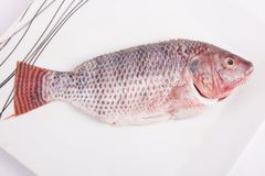 Fresh Tilapia Fish Stock Photography