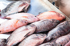 Fresh Tilapia Fish,traditional fish in the market. At Asia Stock Images