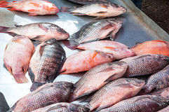 Fresh Tilapia Fish,traditional fish in the market. At Asia Stock Image