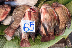 Fresh tilapia fishes at the fish market, Thailand. Royalty Free Stock Image