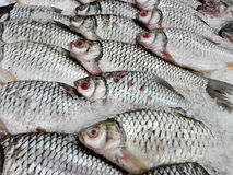 Fresh Tilapia fishes on ice Royalty Free Stock Photos