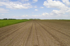 Fresh tilled field Royalty Free Stock Photos