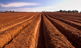 Fresh tilth. Arable land with furrows going to horizon under blue sky Royalty Free Stock Photos