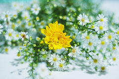 Fresh,tiny and beautiful flower. Fresh,tiny beautiful flowers in the market Stock Photography