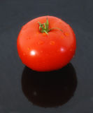 Fresh tomato. Red tomato taken on a black background. picture taken on the 2 of september stock photography