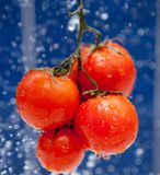 Fresh tomato Stock Image