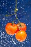 Fresh tomato Royalty Free Stock Image