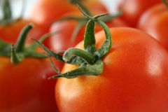 fresh tomato Royalty Free Stock Photos