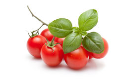Fresh Tomato And Basil Royalty Free Stock Photos