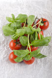 Fresh tomato and basil on paper Royalty Free Stock Photography