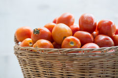 Fresh tomato in basket Royalty Free Stock Images