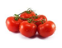 Fresh tomato branch on white background. Fresh tomato branch with water drops on white background Stock Photography