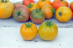 Fresh tomato. Fresh colorful organic tomato from the garden Stock Photos