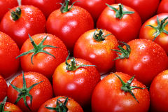 Fresh tomato fruits as a background Stock Photos