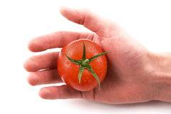Fresh tomato in hand. Fresh tomato in human hand Royalty Free Stock Photography