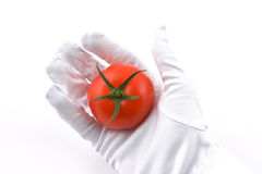 Fresh tomato in hand. With white glove Stock Image