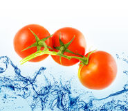 Fresh tomato jumping Royalty Free Stock Images