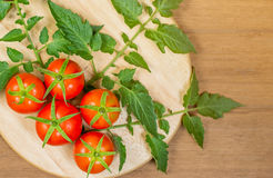 Fresh tomato and leaves Stock Photography