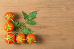 Fresh tomato and leaves Royalty Free Stock Images