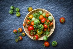 Fresh tomato organic with green and harvesting ripe red tomatoes in basket on dark royalty free stock images