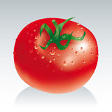 Fresh tomato. Fresh red and wet tomato stock illustration