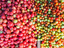 Fresh tomato for sale at market Royalty Free Stock Image