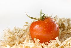 Fresh tomato with water drops in sawdust over whit Royalty Free Stock Photo