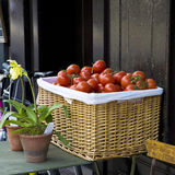 Fresh tomato in a wicker basket Royalty Free Stock Images