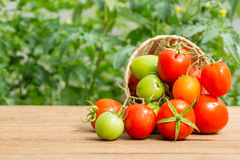 Fresh tomato Stock Photos
