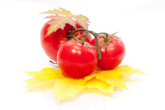 Fresh tomato on yellow leaves. On white background Royalty Free Stock Images
