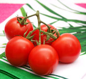 Fresh tomatoes. Some fresh tomatoes on a green cloth Royalty Free Stock Photos