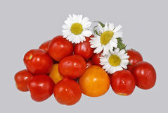 Fresh tomatoes. Small group of fresh tomatoes of a garden camomile Royalty Free Stock Image