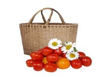 Fresh tomatoes. Small group of fresh tomatoes of a garden camomile Royalty Free Stock Photography
