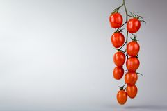 Fresh tomatoes. Fresh and ripe tomatoes on a vine with lots of open space for text Royalty Free Stock Photos