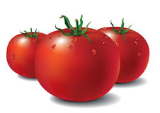 Fresh tomatoes. Vector illustration of three fresh tomatoes with drops of water on them Royalty Free Stock Photo