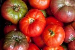 Fresh tomatoes background Stock Image