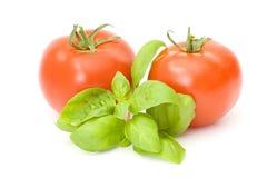 Fresh tomatoes and basil Royalty Free Stock Photos