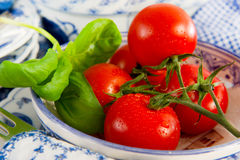 Fresh tomatoes with basil Royalty Free Stock Images